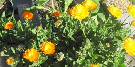 Taller de Huerta Primavera-Verano entradas