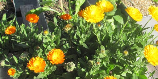 Taller de Huerta Primavera-Verano
