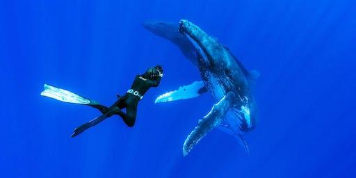 Multivisionsshow | Leidenschaft Ozean