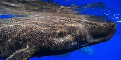 Pre-Opening | Das Wesen der Wale