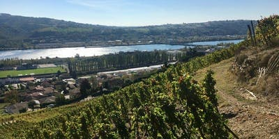 Rhone Rangers: Rhone Grapes at Home and Abroad