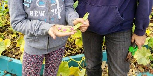 Atelier de conservation des semences/seed saving workshop