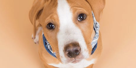 Fall in (Puppy) Love with Alive Rescue  tickets