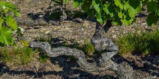 Dionysia: Greek Wine
