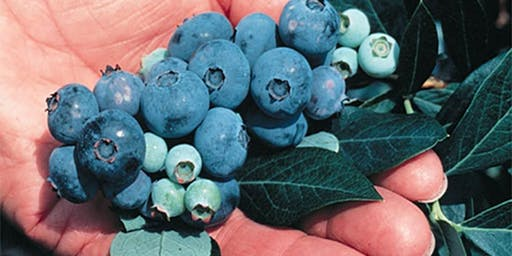 Food Safety Training for Blueberry Growers, March 18,2020