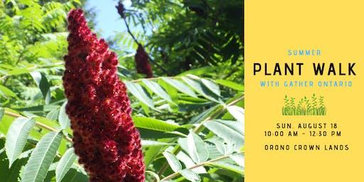 Summer Edible Plant Walk - Orono Crown Lands