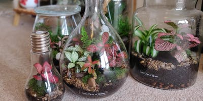 Little Drop of Green: Terrarium Workshop