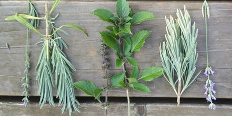 Growing Culinary and Medicinal Herbs from Seeds and Cuttings tickets