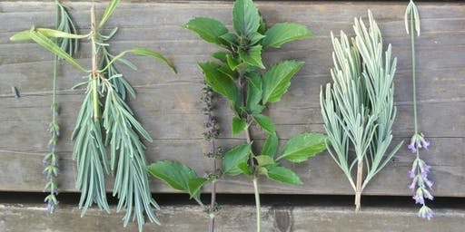 Growing Culinary and Medicinal Herbs from Seeds and Cuttings