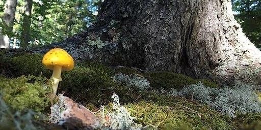 Journey to the Trees - Autumn Retreat