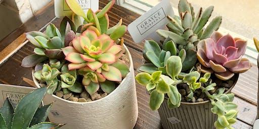 Succulent & Plant Workshop