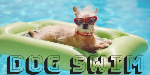 2019 Dog Swim at Ziegler Pool