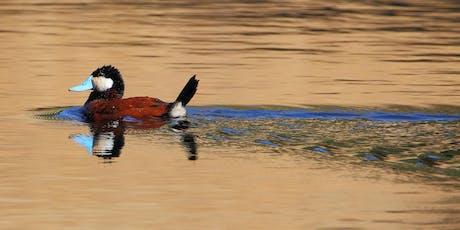 Little Uvas Creek Bird Walk tickets