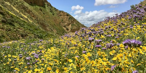 Mapping California's Important Plant Areas