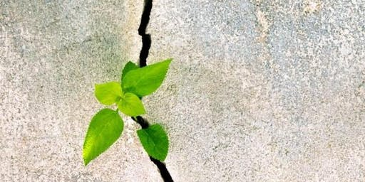 Moving Through Trauma into Thriving: Building Resilience in Our Lives and Work