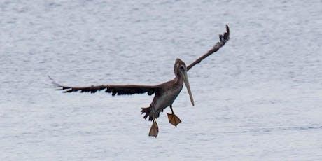 HIKE NETARTS SPIT: Bay Birds & Migrating Visitors tickets