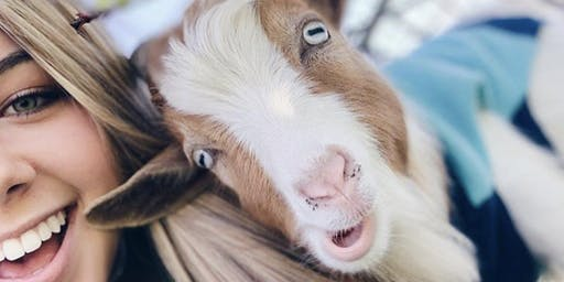 Goat Yoga SHUCK N JIVE Benefiting Dallas Children Charity!