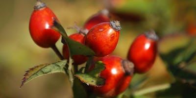 Medicinal Plant Foraging Walk