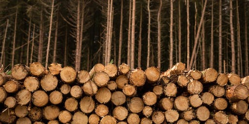 Money Grows on Trees: Adding value to your farm with forestry