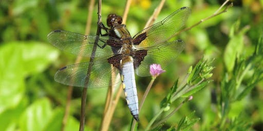 Dragonfly and damselfly discovery walk