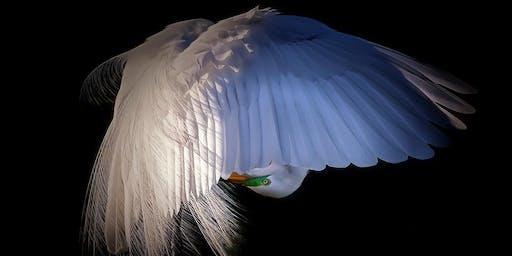 Photographic Exploration • Birds in Flight