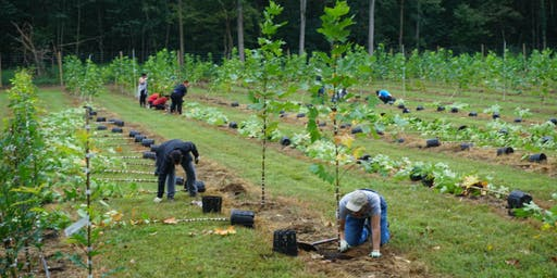 Volunteer: September Casey Tree Farm Event
