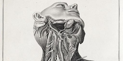 Under the Skin: Anatomy, Art and Identity