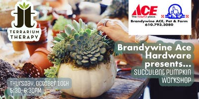 Succulent Pumpkin Workshop at Brandywine Ace Pet & Farm