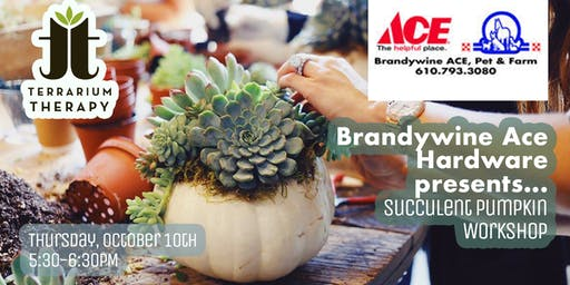 Pumpkin Succulent Workshop at Brandywine Ace Pet & Farm