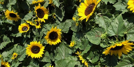 Newport Sunflower Festival - World Record Attempt! tickets