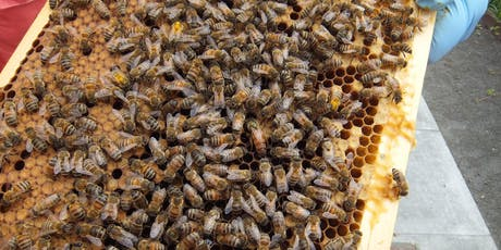 Integrated Pest Management & Adult Bee Diseases tickets