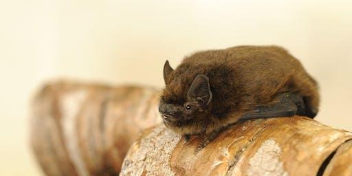 Bat walk, Bog Meadows