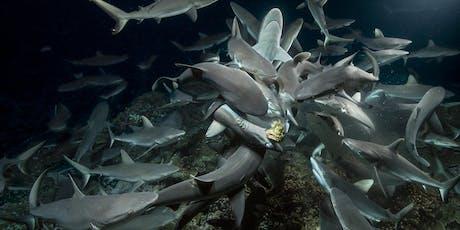 700 Sharks Tickets