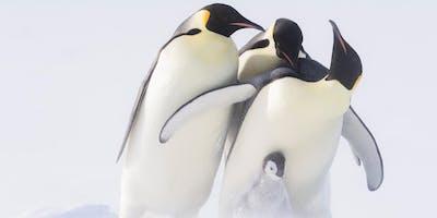 Wilde Dynastien – Kaiser der Antarktis