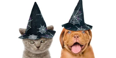 Halloween 5K Fun Run sponsored by Friends of Randolph Animal Pound