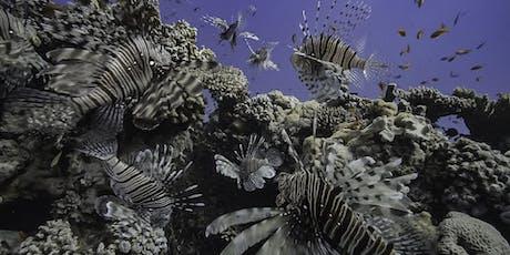 Geheimnisvolles Mittelmeer – Von Berberaffen und Feuerfischen Tickets