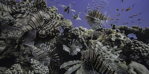 Geheimnisvolles Mittelmeer – Von Berberaffen und Feuerfischen