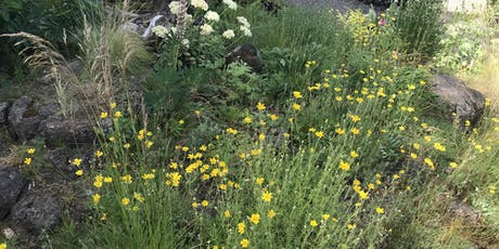 Collecting Native Seed tickets