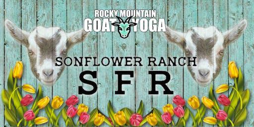 Goat Yoga - September 7th (SonFlower Ranch)