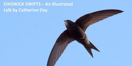 CHISWICK SWIFTS – An illustrated talk by Catherine Day tickets