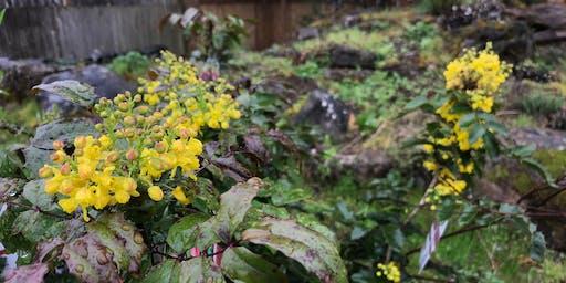 Meet the Locals: Intro to Native Shrubs & Perennials