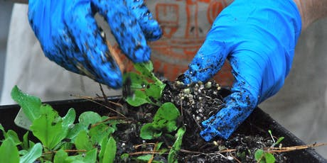 Introduction to Plant Care and Greenhouse Practices tickets