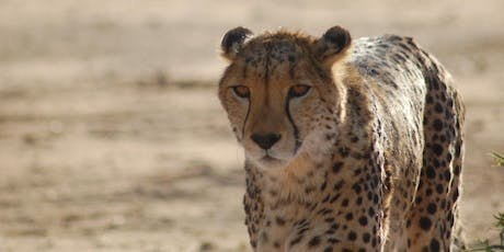 An Evening with Dr. Laurie Marker, Director of Cheetah Conservation Fund tickets