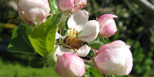 The Wonder of the Honey Bee - Public Talk by Julia Common
