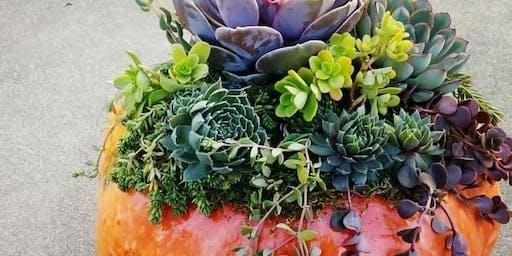 succulent topped pumpkins!