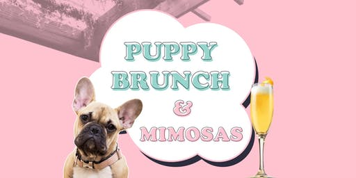 Puppy Brunch at thedeck