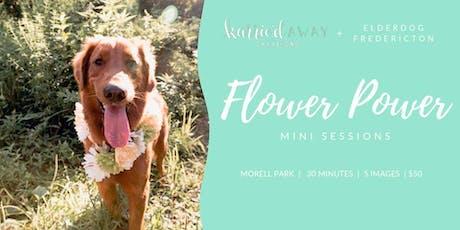 Dog Portrait Photoshoot Fundraiser tickets
