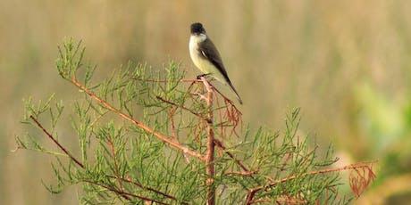 Adventure Awaits - Meet the Snowbirds-Birdwatching tickets
