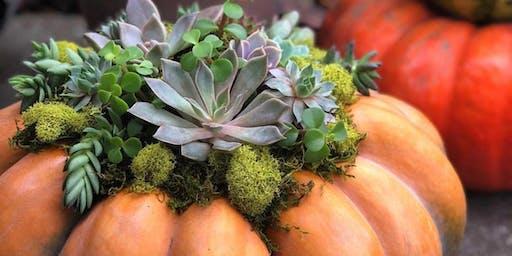 Succulent Pumpkin Workshop **Sold out**