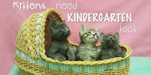 August 2019 Kitten Kindergarten (2nd session)